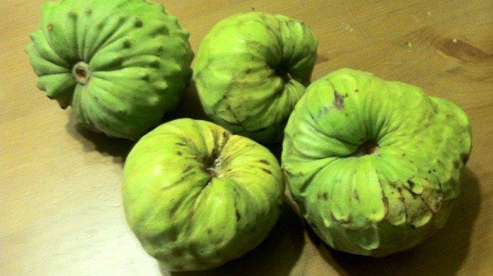 what does cherimoya taste like?